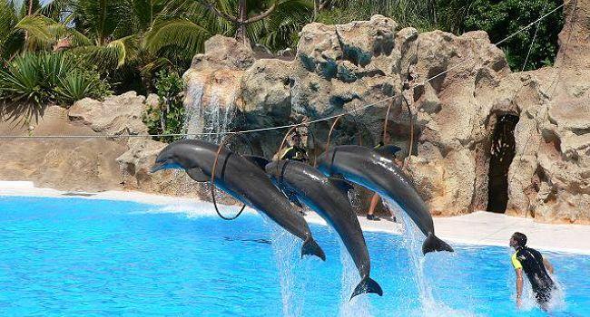 Delfíni na Tenerife